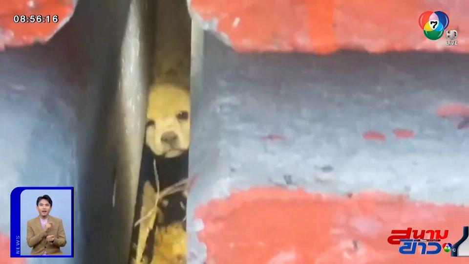 ภาพเป็นข่าว : ลุ้นช่วย สุนัขติดในกองเสาไฟฟ้า จ.กระบี่