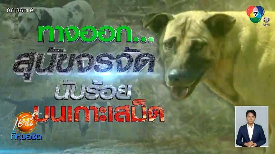 Green Report : ทางออก...สุนัขจรจัดนับร้อยบนเกาะเสม็ด
