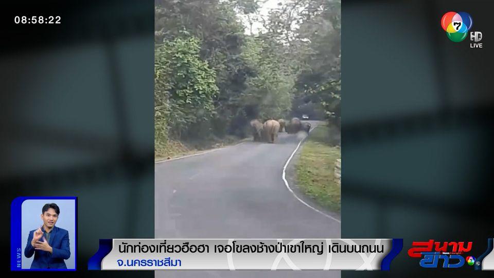 ภาพเป็นข่าว : นทท.ฮือฮา! เจอโขลงช้างป่าเขาใหญ่ เดินบนถนน