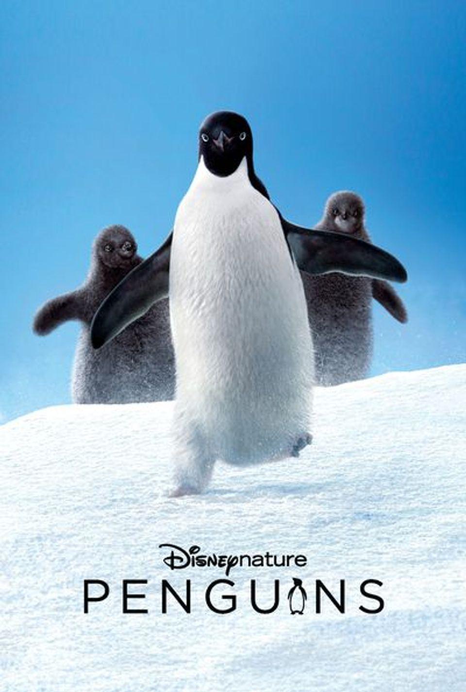 """ภ.สารคดี """"เพนกวินแห่งอาณาจักรน้ำแข็ง"""" (PENGUINS)"""