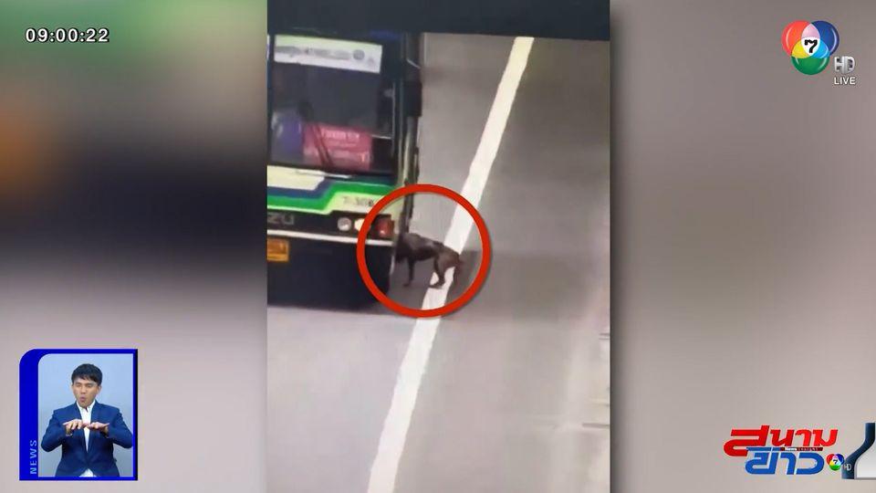 ภาพเป็นข่าว : รถเมล์น้ำใจงาม! จอดรับสุนัขหลงทางบนทางด่วน
