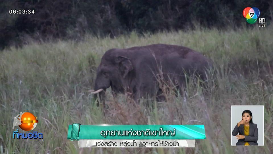 อุทยานแห่งชาติเขาใหญ่ เร่งสร้างแหล่งน้ำ - อาหารให้ช้างป่า