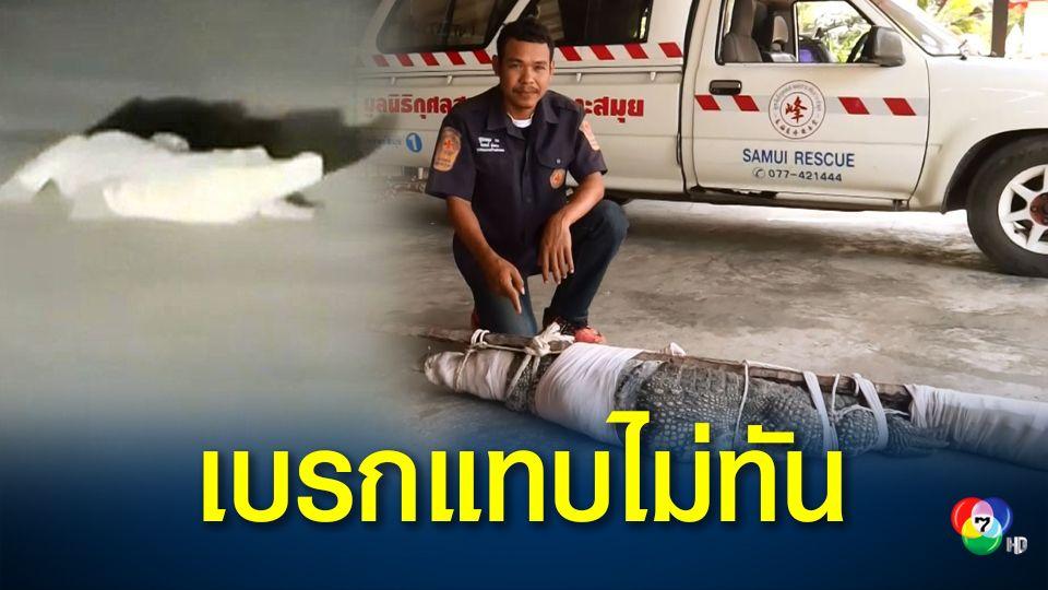 หนุ่มสาวเกาะสมุยแจ้งกู้ภัยช่วยจับจระเข้ นอนขวางถนนในซอยเปลี่ยว