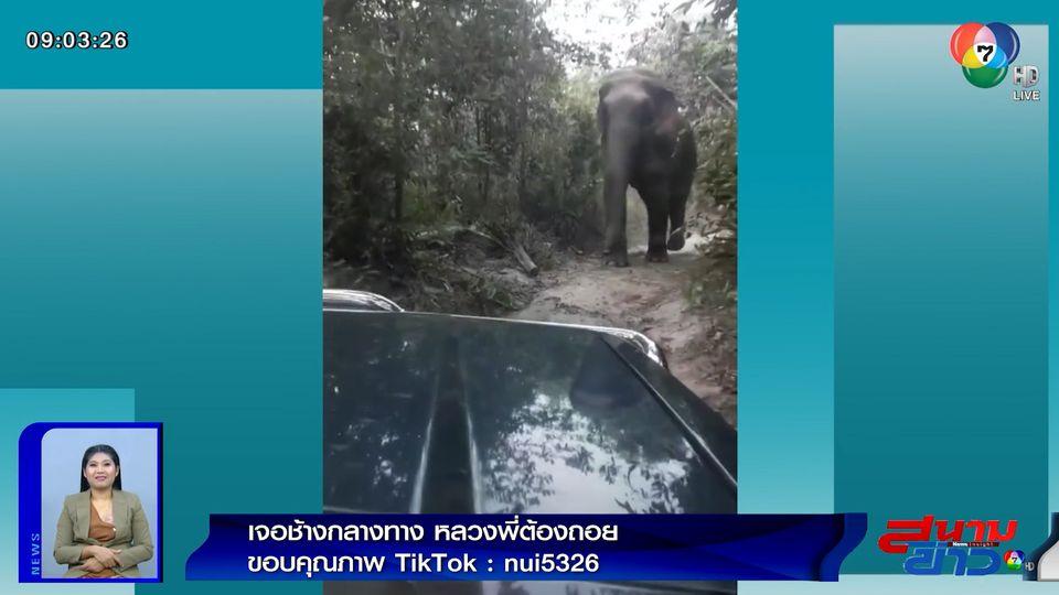 ภาพเป็นข่าว : นาทีระทึก! หลวงพี่เจอช้างป่ากลางทาง สั่งคนขับรถโกยหน้าตั้ง
