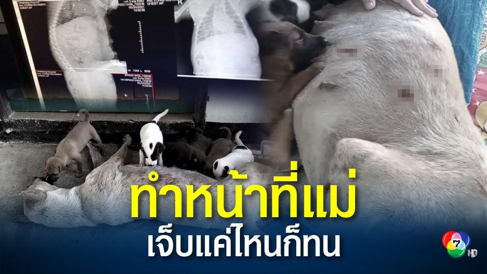 สะเทือนใจ สุนัขแม่ลูกอ่อนถูกยิงเจ็บ ยังนอนให้นมลูก กู้ภัยอุ้มผางเร่งช่วยเหลือ