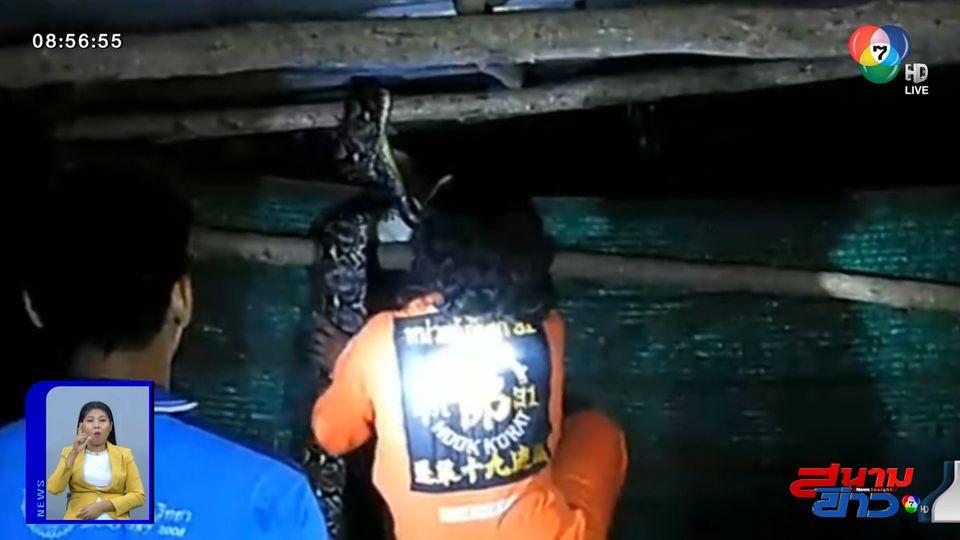 ภาพเป็นข่าว : จับงูหลามยาว 4 เมตร หวังเขมือบไก่ยามวิกาล จ.นครราชสีมา