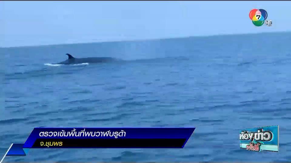 รายงานพิเศษ : ตรวจเข้มพื้นที่พบวาฬบรูด้า จ.ชุมพร