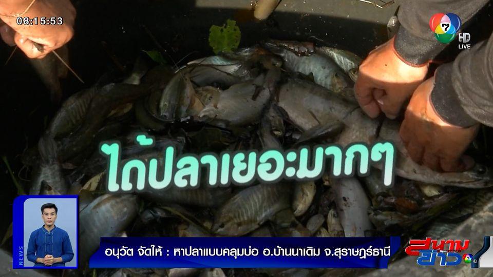 อนุวัตจัดให้ : หาปลาแบบคลุมบ่อ อ.บ้านนาเดิม จ.สุราษฎร์ธานี ตอน 2