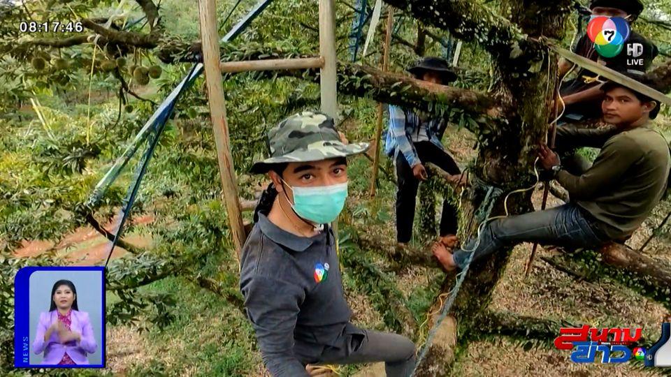 กล้าลองกล้าลุย : คนรับจ้างโยงทุเรียน อาชีพบนความเสี่ยงสูง จ.จันทบุรี ตอน 1