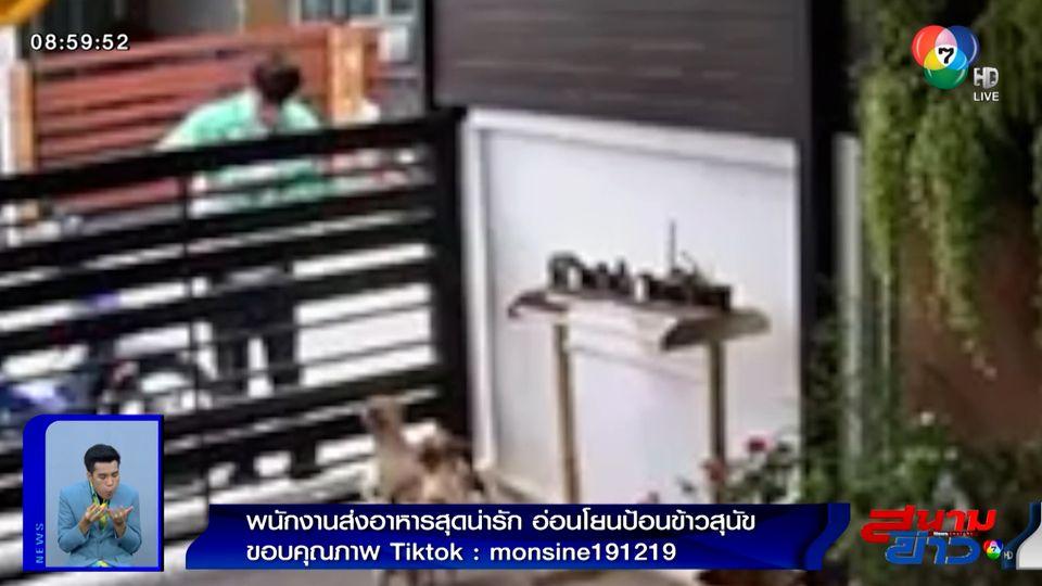 ภาพเป็นข่าว : พนักงานส่งอาหารสุดน่ารัก อ่อนโยนป้อนข้าวสุนัข