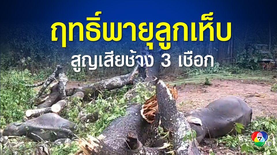 สลด ช้าง 3 เชือก สังเวยพายุลูกเห็บ ถูกต้นใหม่ใหญ่โค่นทับ