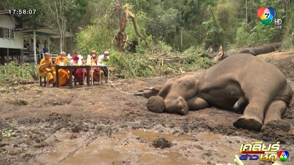 สลด พายุพัดไม้ตะเคียน 100 ปี หักโค่นทับช้างล้ม 3 เชือก