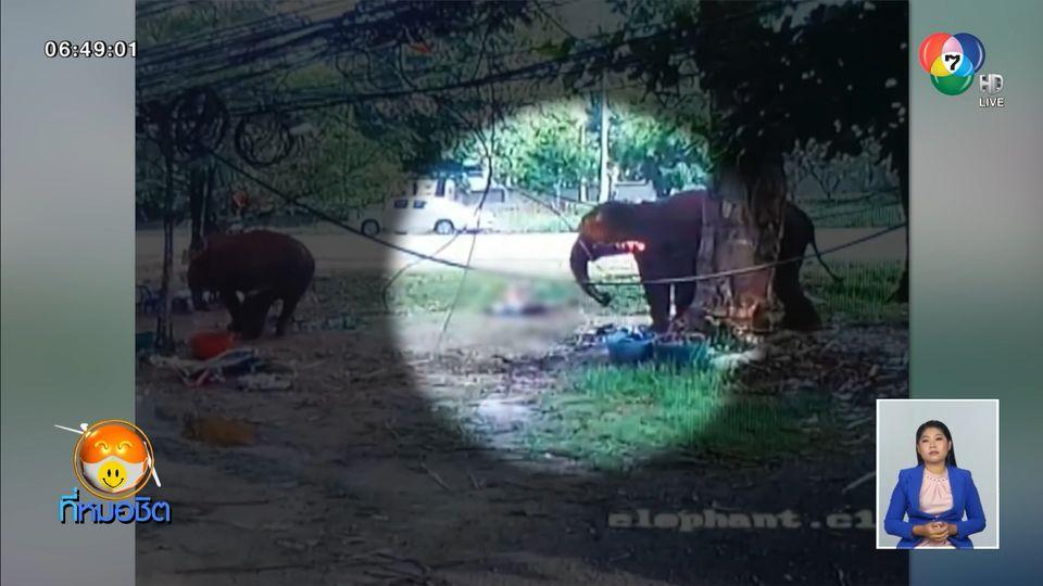 นักท่องเที่ยวถืออ้อยไปป้อนช้าง ถูกเหยียบเสียชีวิต