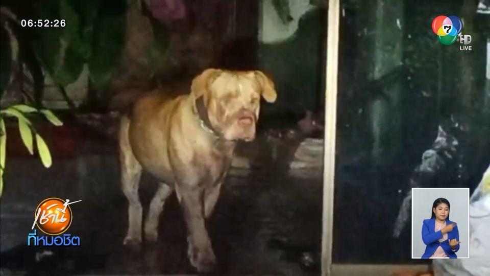อุทาหรณ์ สุนัขแบนด็อก ขย้ำเจ้าของสาหัส ผู้เชี่ยวชาญชี้เลี้ยงผิดวิธีเสี่ยงตาย