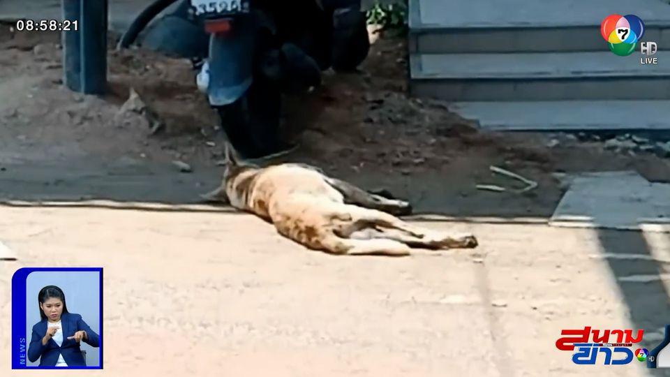ภาพเป็นข่าว : สาวจิตใจดี ช่วยสุนัขจรจัดชักเกร็ง-น้ำลายฟูมปากอยู่ข้างถนน ส่งรักษา