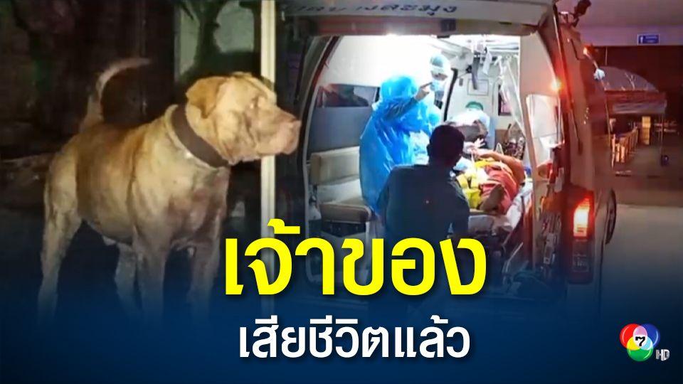 เสียชีวิตแล้ว เจ้าของสุนัขแบนด็อก หลังถูกขย้ำอาการสาหัส