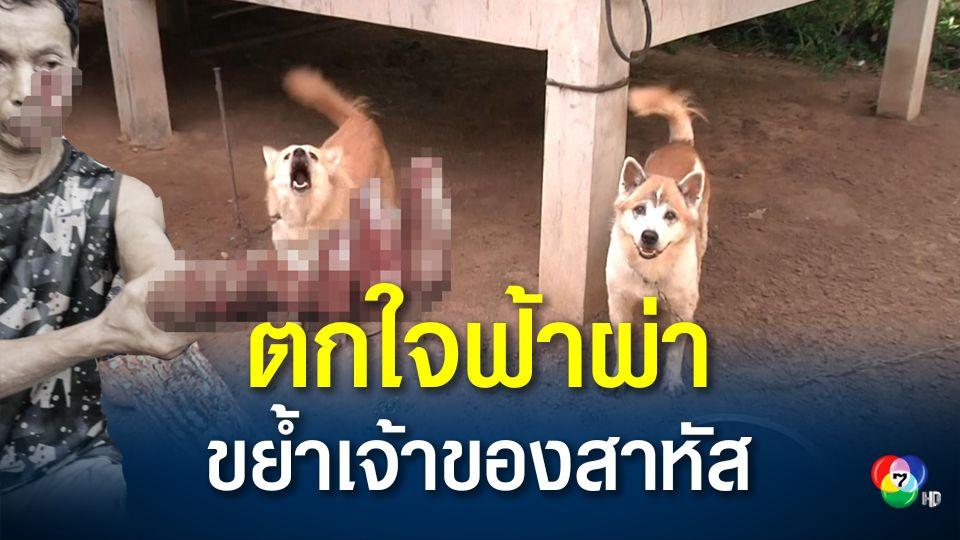 สุนัขบางแก้วตกใจเสียงฟ้าผ่า ขย้ำเจ้าของสาหัส หวิดตาบอด