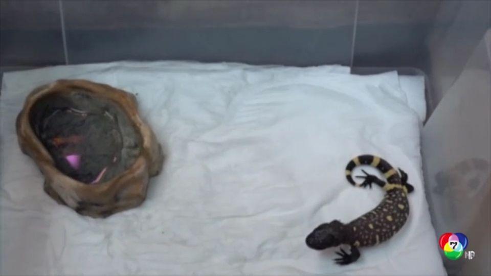 กิ้งก่าหายากฟักตัวในสวนสัตว์โปแลนด์