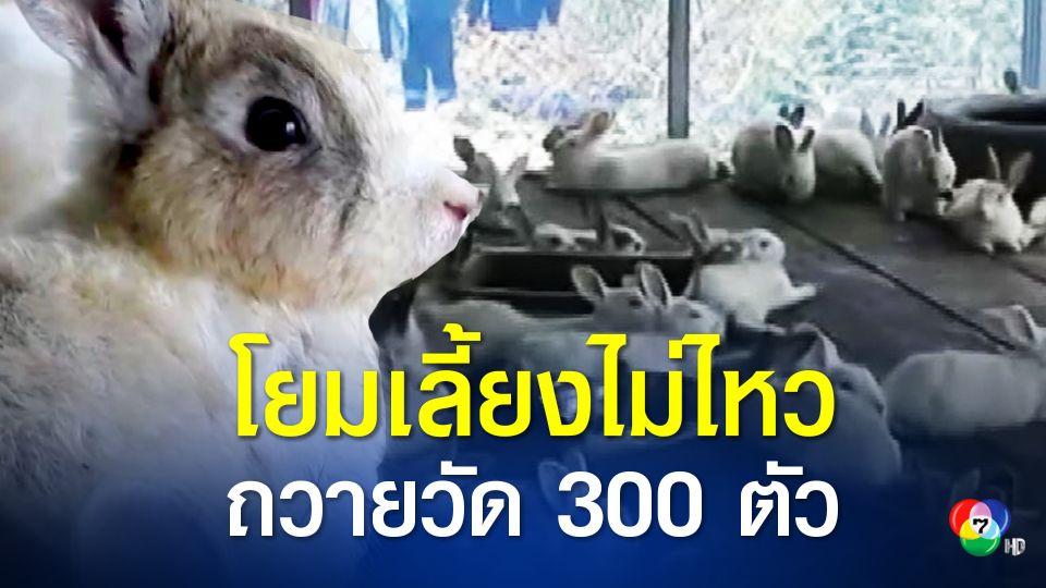 โควิดพ่นพิษ! โยมเลี้ยงไม่ไหว ถวายกระต่าย 300 ตัว ให้วัด เจ้าอาวาสพร้อมยกให้คนที่อยากเลี้ยงนำไปดูแลต่อ