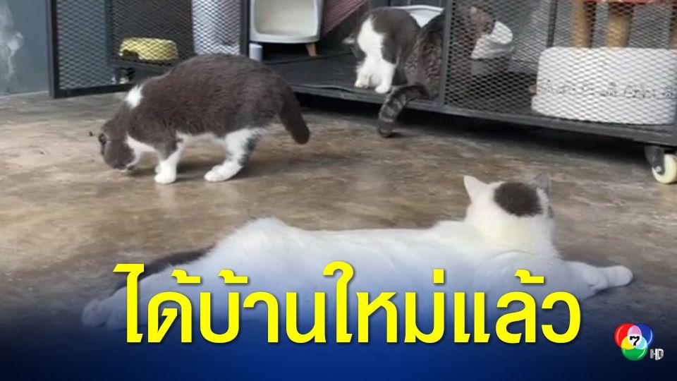 """เพจดัง """"ทูนหัวของบ่าว"""" ชนะประมูลแมวของกลางทั้ง 6 ตัว"""