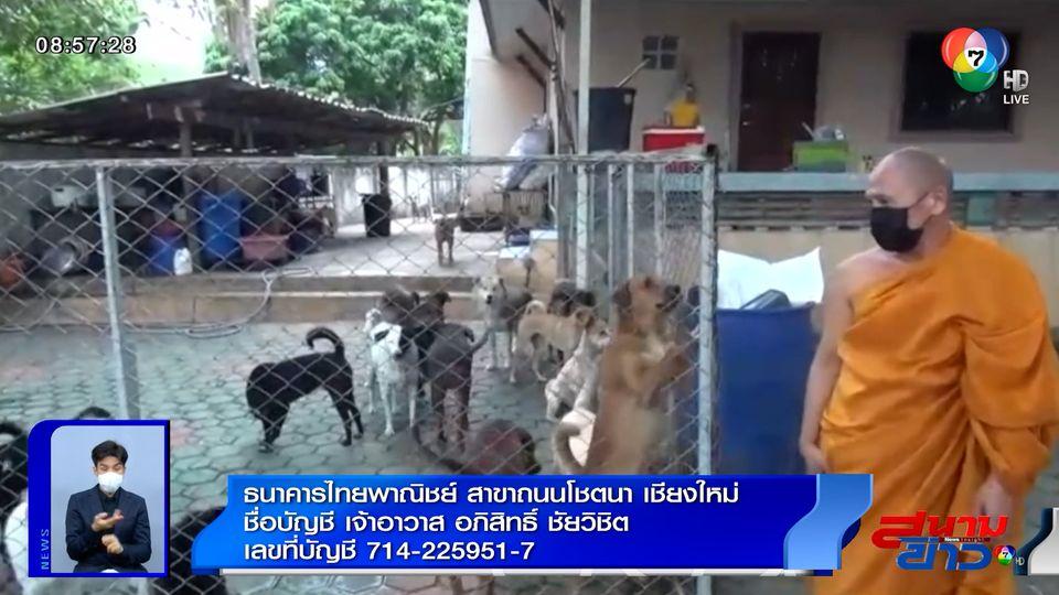 ภาพเป็นข่าว : วอนผู้ใจบุญช่วยเหลือ โรคโควิด-19 ทำสุนัขในวัด เริ่มขาดอาหาร จ.เชียงใหม่