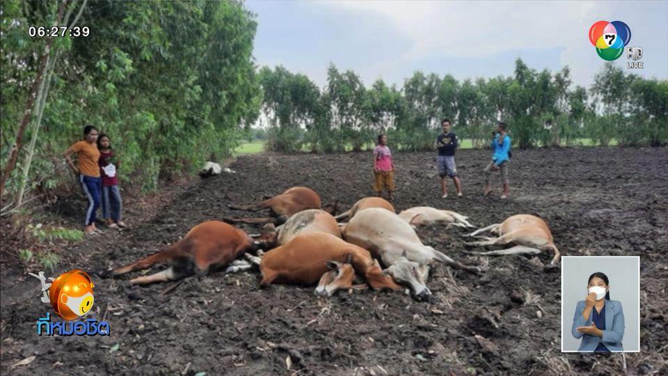 พายุฤดูร้อนถล่มหลายจังหวัด ฟ้าผ่าวัวตาย 11 ตัว
