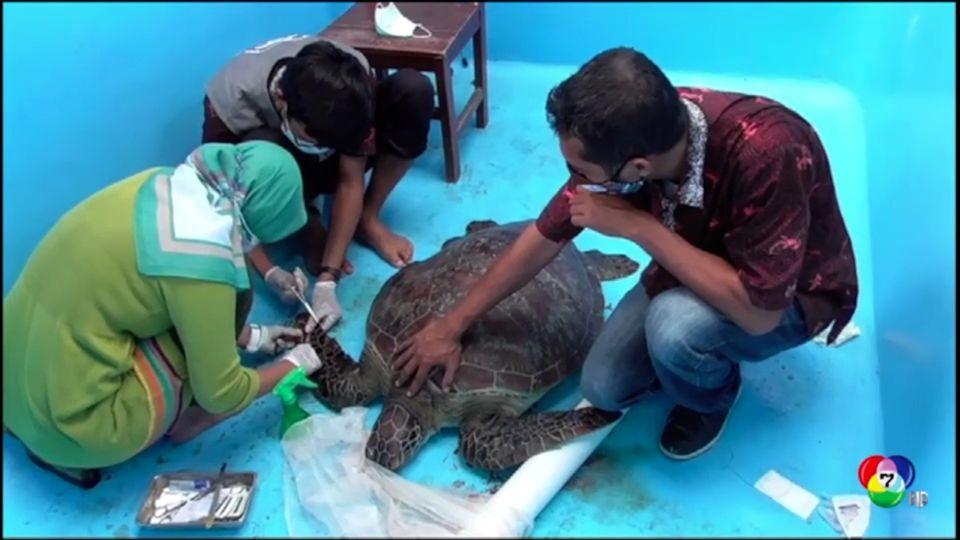 จับชายลักลอบค้าเต่ากระในอินโดนีเซีย