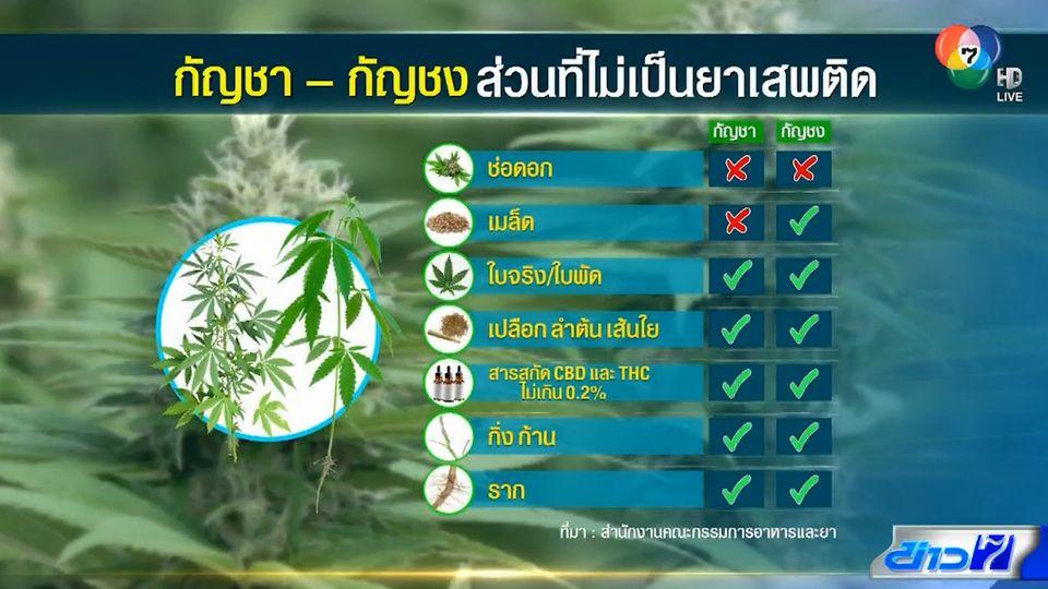 ตีตรงจุด : เปิดกฎหมายพืช 3 ก. ทำอะไรได้บ้าง?