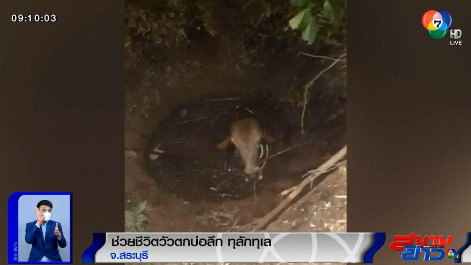 ภาพเป็นข่าว : ช่วยชีวิตวัวตกบ่อลึก ลอยคอนานตั้งแต่กลางดึกยันรุ่งสาง