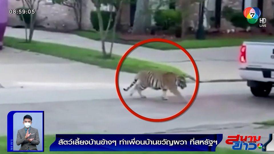 ภาพเป็นข่าว : เพื่อนบ้านผวา! หลังบ้านใกล้เรือนเคียงเลี้ยงเสือโคร่งเป็นสัตว์เลี้ยง