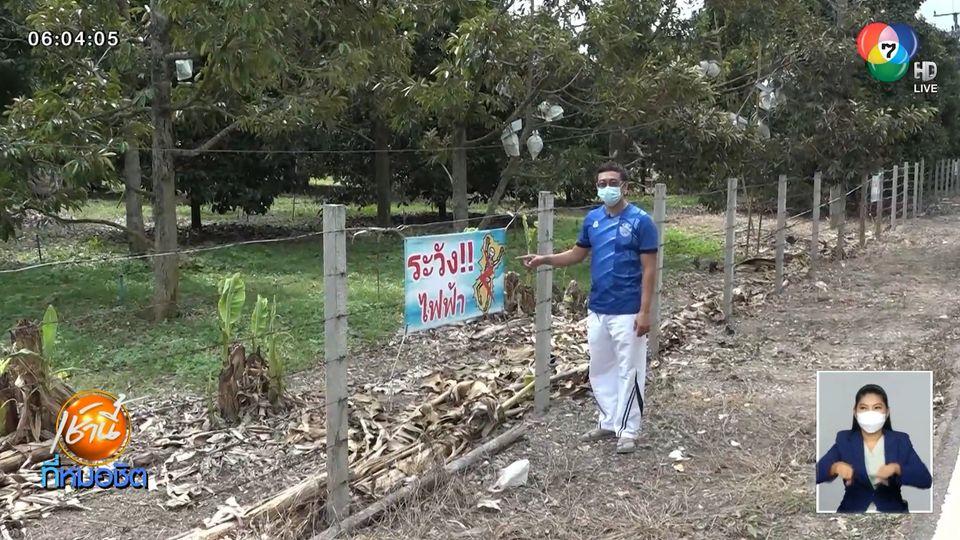 ชาวสวนสุดทน ถูกขโมยตัดผลทุเรียน 30-40 ลูก วอนโจรเห็นใจ จ.ปราจีนบุรี