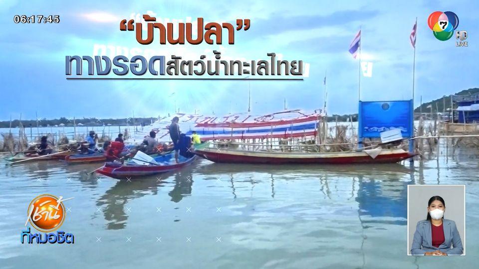 Green Report : บ้านปลา ทางรอดสัตว์น้ำทะเลไทย