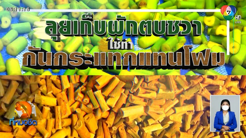 Green Report : ลุยเก็บผักตบชวา ใช้ทำกันกระแทกแทนโฟม
