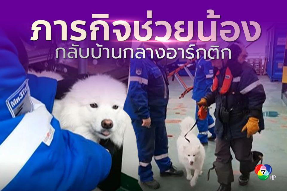 จนท.เรือตัดน้ำแข็งเร่งช่วยเหลือสุนัขที่อยู่บนทะเลสาบน้ำแข็งในอาร์กติก