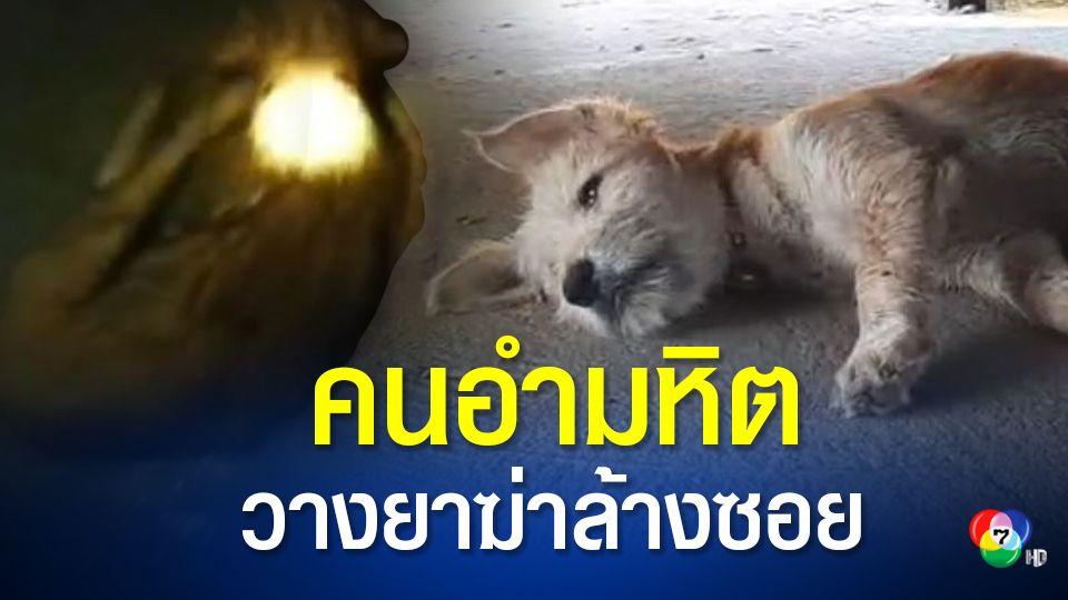 คนอำมหิต วางยาเบื่อสุนัข-แมว ตายเกลื่อน ชาวบ้านหวั่นมิจฉาชีพฆ่าปูทางลักทรัพย์
