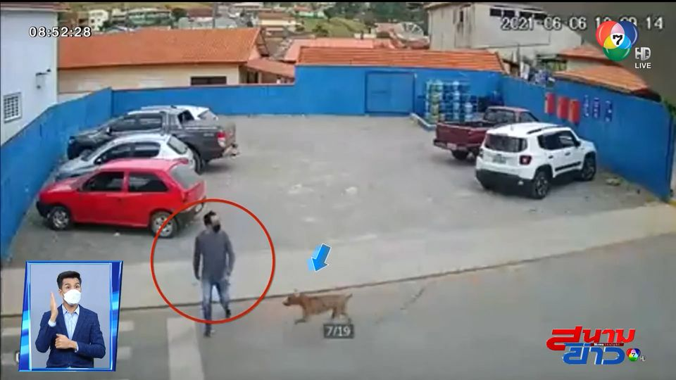 ภาพเป็นข่าว : ชายเคราะห์ร้ายข้ามถนนอยู่ดีๆ โดนสุนัขชนแล้วหนี