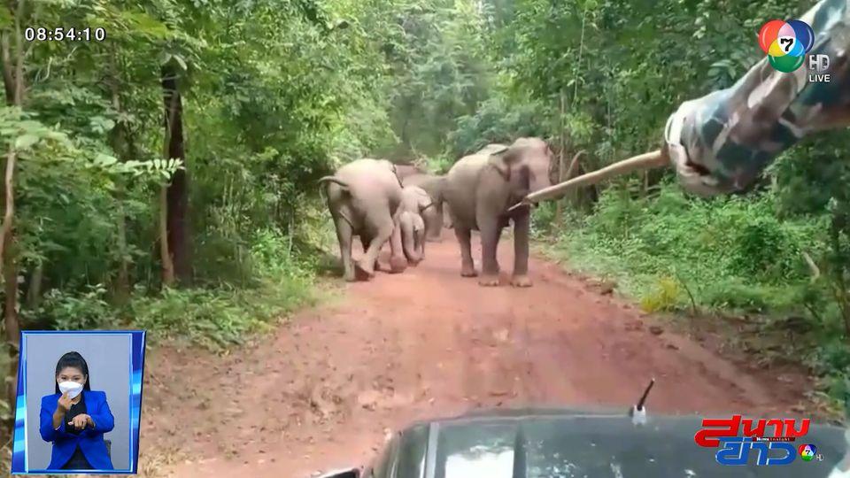 ภาพเป็นข่าว : ช้างป่ายกโขลงปิดถนน จนท.ที่ว่าแน่ยังต้องถอย