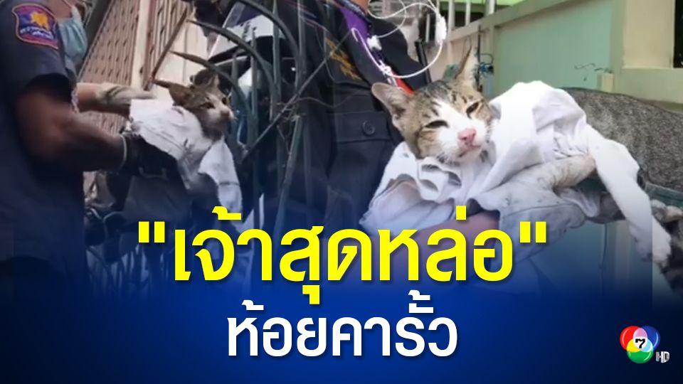แมวจรจัดเพศผู้ ถูกเหล็กเสียบทะลุขาห้อยคาขอบรั้วกันขโมยกว่า 1 วัน ชาวบ้านสงสารลงขันช่วยค่ารักษา