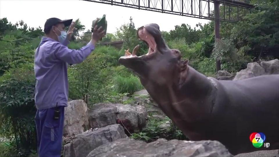 สวนสัตว์จีนให้อาหารสัตว์ต้อนรับเทศกาลไหว้บ๊ะจ่าง