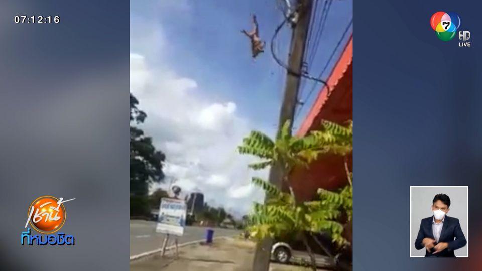 ลิงแสมไต่สายไฟ พลาดท่าถูกช็อต ร่วงลงพื้นสูงเกือบ 10 เมตร