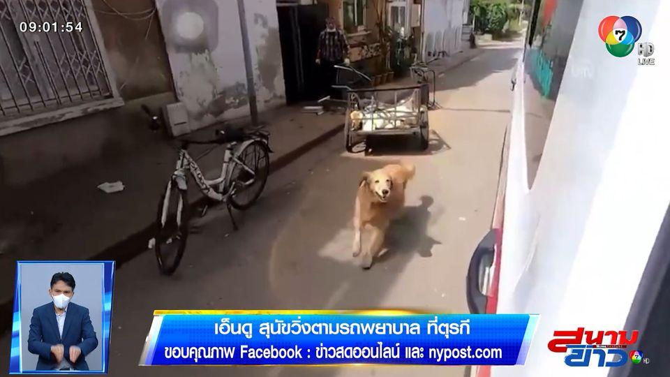 ภาพเป็นข่าว : เอ็นดู! สุนัขเป็นห่วงเจ้าของ วิ่งตามรถพยาบาลที่ตุรกี