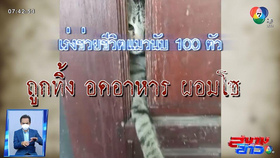 รายงานพิเศษ : เร่งช่วยเหลือแมวถูกทิ้งกว่า 100 ตัว จ.ปทุมธานี