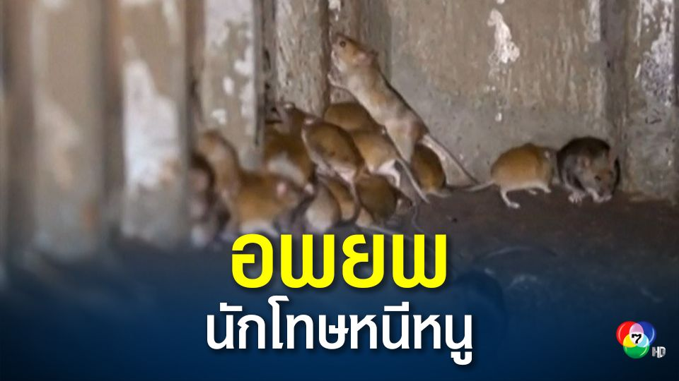 ออสเตรเลียสั่งอพยพนักโทษ หลังหนูบุกทำลายเรือนจำ