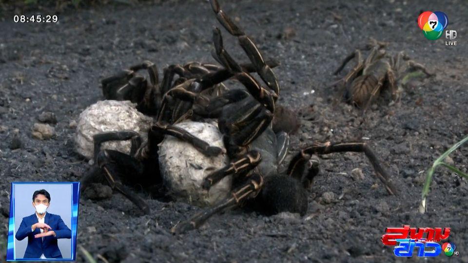 อนุวัตจัดให้ : เมนูเด็ดสัตว์มีพิษ