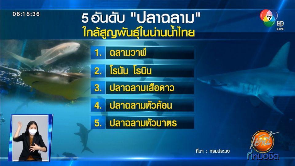 Green Report : ส่องสถานการณ์ ปลาฉลาม น่านน้ำไทย