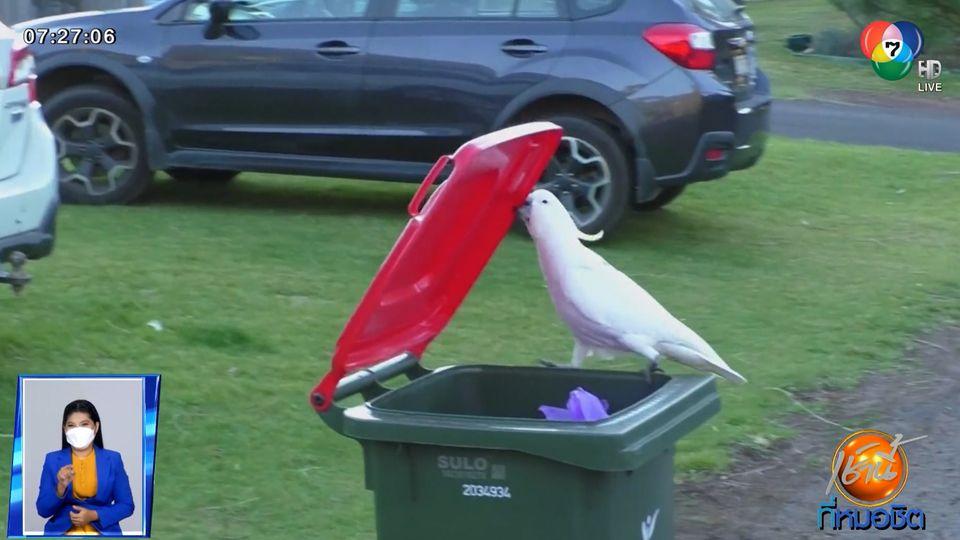 นกแก้วสอนเพื่อนเปิดฝาถังขยะ