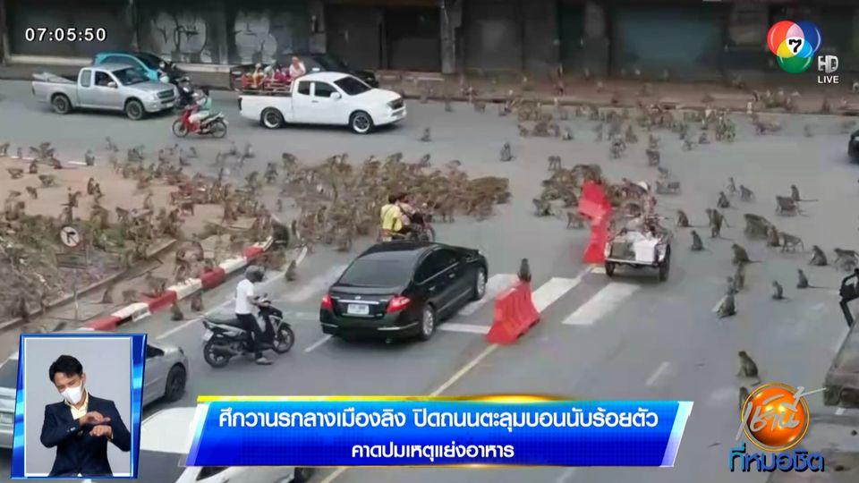 ศึกวานรกลางเมืองลิง ปิดถนนตะลุมบอนนับร้อยตัว คาดปมเหตุแย่งอาหาร