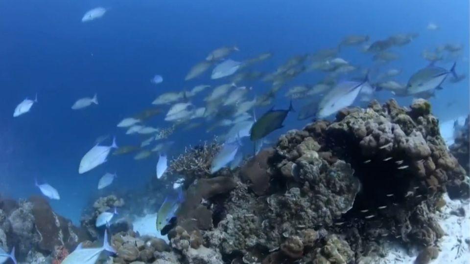 ชมภาพใต้ท้องทะเลสวยงามเกาะสี่ หมู่เกาะสิมิลัน จ.พังงา