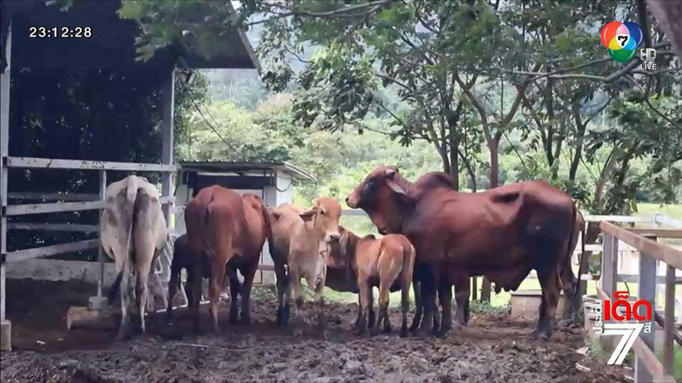 เร่งฉีดวัคซีน ลัมปี สกิน เกรงสัตว์บ้านนำโรคไปติดสัตว์ป่า