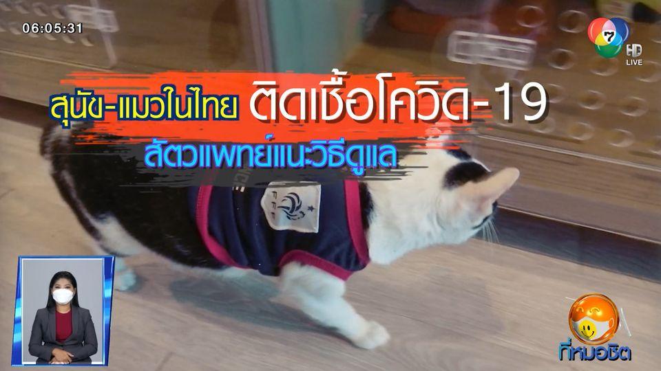 Green Report : สุนัข-แมวในไทย ติดเชื้อโควิด-19 สัตวแพทย์แนะวิธีดูแล